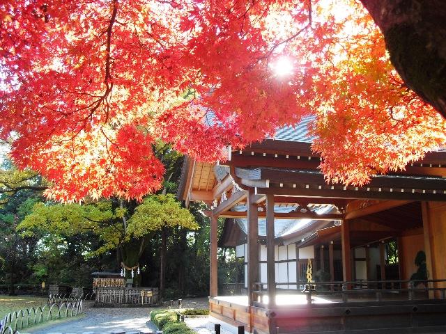 【熊本で紅葉のキレイな場所】絶対見に行きたーい!10スポットまとめ