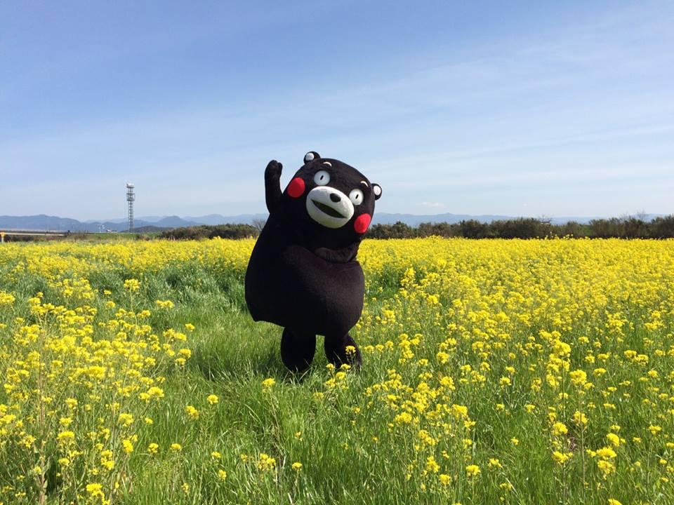 【熊本でご当地キャラフェス】くまモン!ふなっしー!達に逢えちゃう