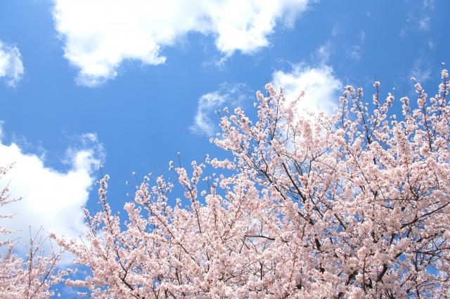 【熊本でオードブル】注文できる10店舗@花見・運動会・ホームパーティなどに