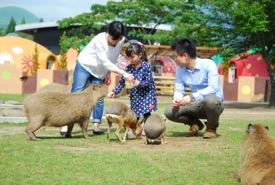 【熊本観光】子ども連れで楽しめちゃう!おすすめ10選