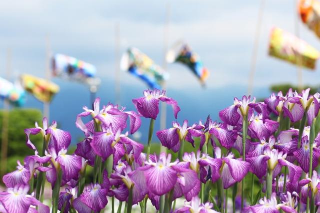 【第13回天草花しょうぶ祭り】5月27日(土) 〜 6月4日(日)