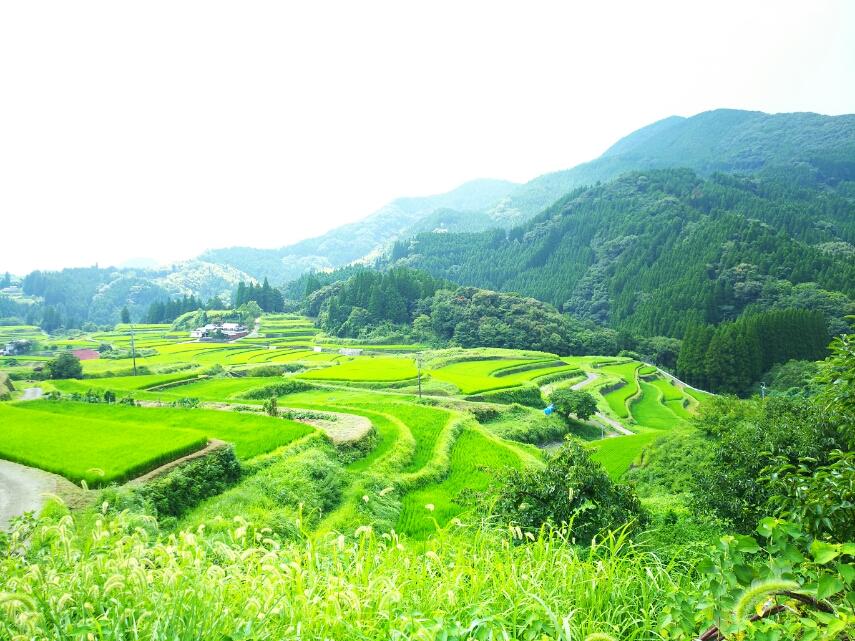 【小崎棚田】熊本!美里町にある絶景。東洋のマチュピュ