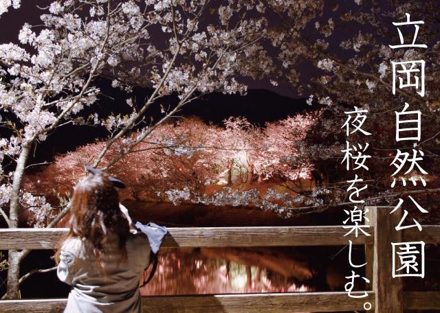 【立岡自然公園】熊本県宇土市!桜のライトアップが幻想的でした