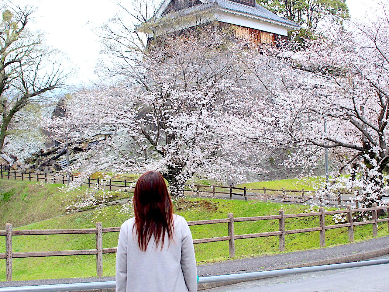 【熊本城 二の丸広場】さくらと、現在の熊本城を見に行こう。
