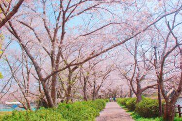 【熊本 桜が見られる場所20選】花見スポットに出かけよう!