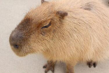 【ふれあい動物王国】阿蘇ファームランドで動物に癒される